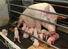 59% support factory farming ban